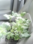 okrainpassengerseat